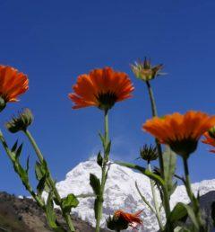 Sarangkot- Dhampuse-Hiking
