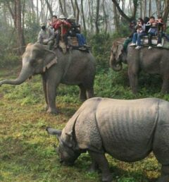 safari tour in nepal