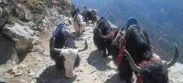Nepal - travel in nepal