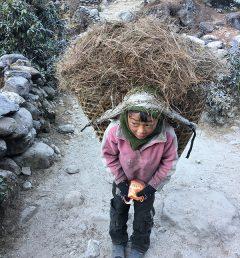 A-boy-carrying-grass