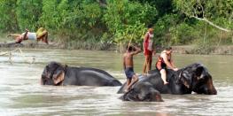 Jungel Safari in nepal